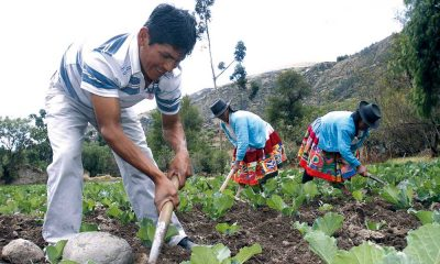 Agricultores campesinos